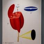 """Виктор Пивоваров """"Окно и сад. Атлас животных и растений"""" 2006. Предоставлено: Московский музей современного искусства."""