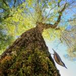 """Андрес Луис Домингес Бланко """"В лесу"""". Предоставлено: Международный фестиваль дикой природы """"Золотая черепаха""""."""