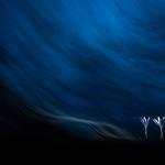 """Тибор Литауски """"Крокусы в тумане"""". Предоставлено: Международный фестиваль дикой природы """"Золотая черепаха""""."""