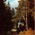 """42. Мещерский Арсений """"Лесной пейзаж"""" 1881 Частное собрание"""