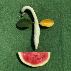 """Никита Лукьянов """"Fruit mask"""". Фотография: Анисия Кузьмина. Предоставлено: Галерея SAMPLE."""