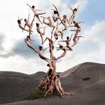 """Роб Вудкокс """"Древо жизни"""" © Rob Woodcox. Предоставлено Центром фотографии имени братьев Люмьер."""