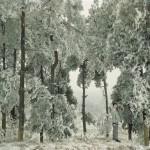 """Чэнь Цзяган """"Холодный лес"""" 2008"""