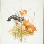 """Валентин Курдов """"Рак. Иллюстрация к книге В.Бианки «Где раки зимуют» 1967"""