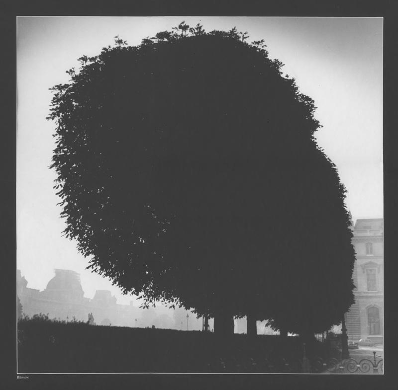 """Андрей Баскаков, Москва """"Дерево"""" Париж, 1970-е"""