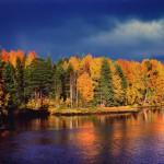 Самат Гильметдинов «Золотой лес перед штормом»