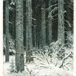 """И.И. Шишкин """"Дремучий лес (Темный лес)"""" 1885"""