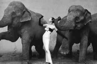 Лекция Елены Якимович «Ретроманы, хулиганы, классики: модное фото 1970-1980-х».
