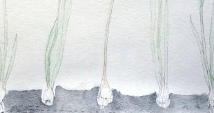 Дарья Кротова. Сбор дождя.