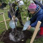 Высадка деревьев в рамках программы «Миллион деревьев» в Дьяковском саду