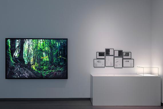 Александра Дейзи Гинсберг «Проект для шестого вымирания» 2015 © Photo: Gert Jan van Rooij