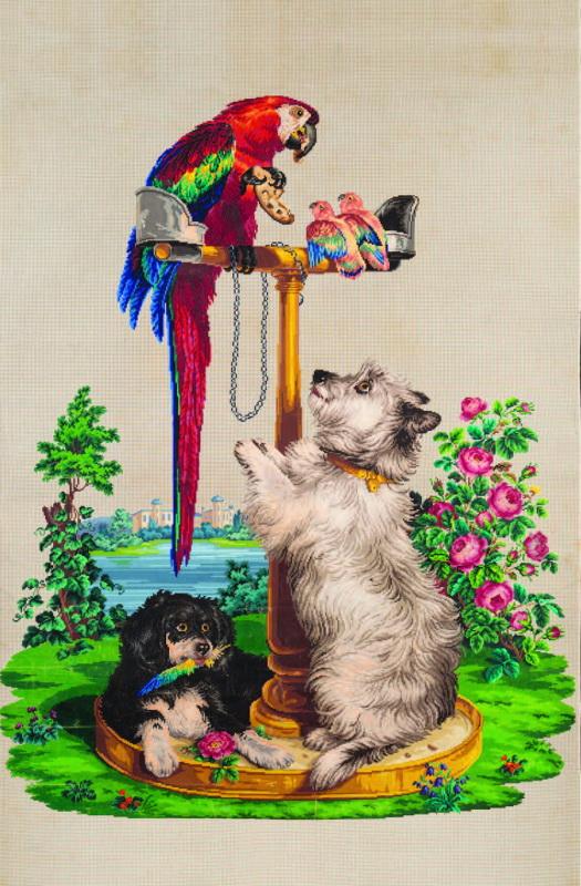 Попугай ара, неразлучники, терьер и спаниель