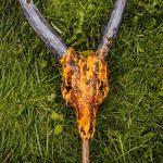 Выставка органической скульптуры. Фото: Егор Николаев.