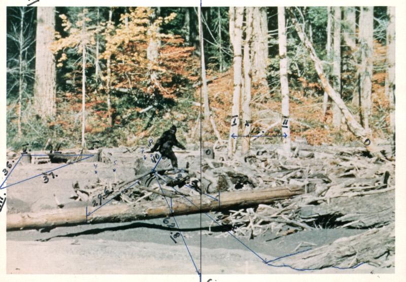 Кадр из фильма Паттерсона-Гимлина, снятого 20 октября 1967 года