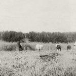 """Борис Кустодиев """"Хлебное поле. Усадьба """"Павловское"""" 1904"""