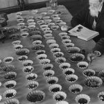 """Михаил Прехнер """"Институт растениеводства"""" Ленинград, 1930-е"""