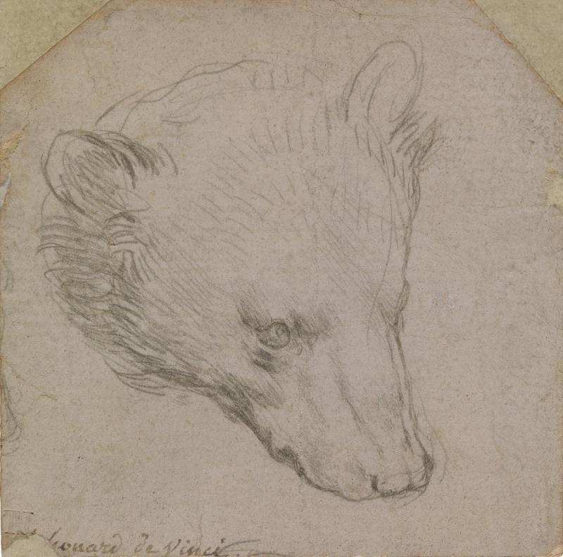 "Леонардо да Винчи ""Голова медведя"" Около 1485"