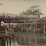 "Тамамура Кодзабуро ""Любование цветами глицинии в чайном доме в Камейдо, Токио"" 1880-1890-е"
