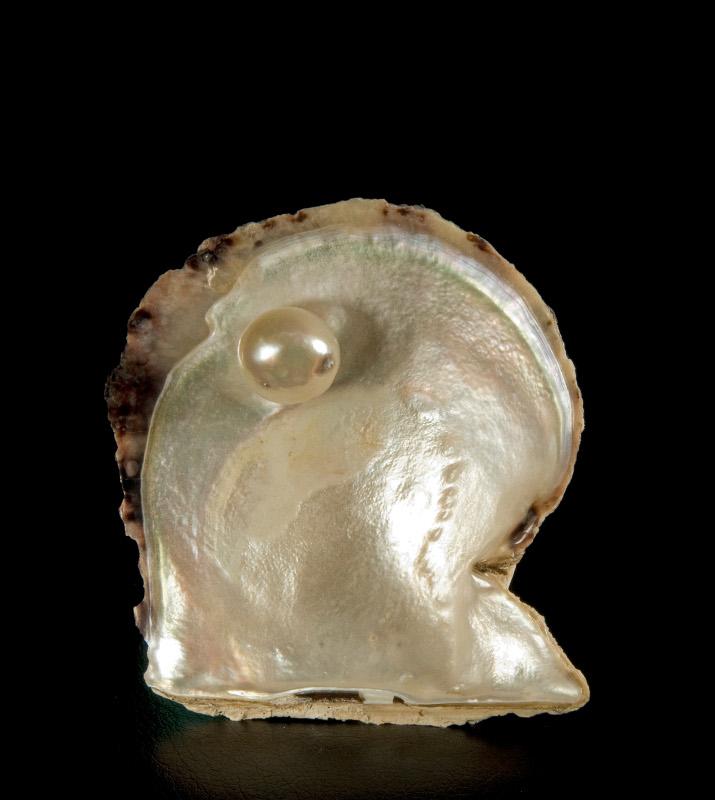 Раковина устрицы из Катара с жемчужиной внутри