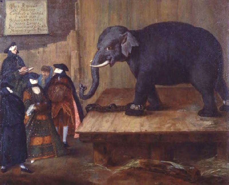 """Пьетро Лонги """"Слон"""" 1774"""