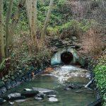 "Джефф Уолл ""Still Creek, Vancouver, Winter 2003"" 2003"