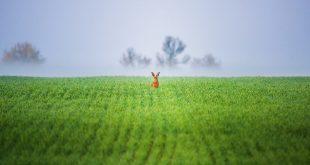 Я | В сердце изображения.