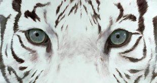 Сергей Кужавский. Белый тигр Запада идет на Восток.