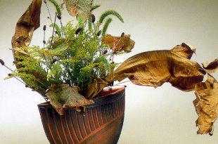Японская осень в музее «Царицыно». Искусство икебаны школы Согэцу.