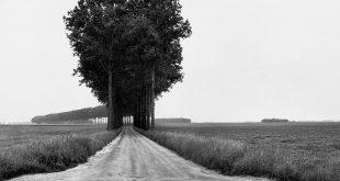 Вангелис Андреопулос. Курс лекций «Полный кадр: человек, город, природа».
