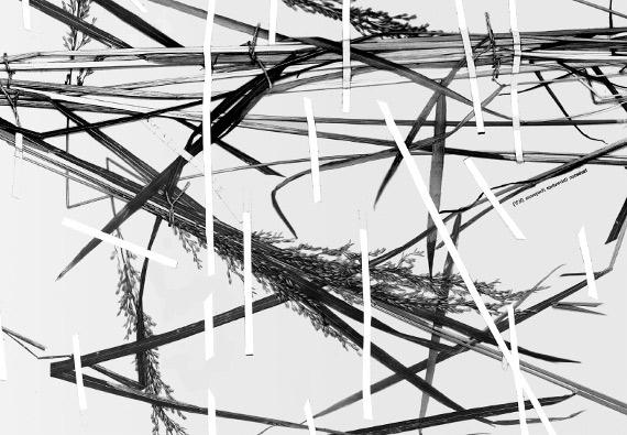 """Выставка """"Засушенному – верить. История Соловецкого лагеря, рассказанная через гербарий"""". Международный Мемориал."""