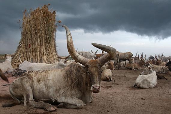 Сергей Ястржембский «Из проекта «Африка: Zoom In / Zoom Out». © Сергей Ястржембский