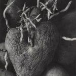 """Аньес Варда """"Картофельное сердце"""". Из серии """"Воспоминание о выставке 1954 года"""" 1953"""