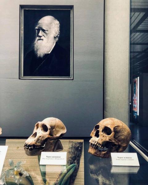 """Выставка """"Дарвин и мы"""". Государственный Дарвиновский музей."""
