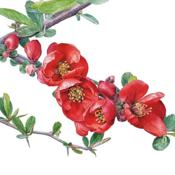 """Выставка """"Цвет Японии"""". Ботанический сад МГУ """"Аптекарский огород""""."""