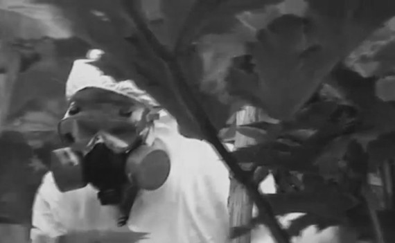 Марина Фоменко «Урожай» Кадр из видео о борщевике