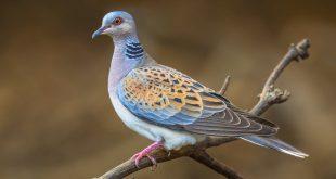 Международный День Птиц в Государственном Дарвиновском музее.