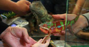 Выставка экзотических животных «Террамания».