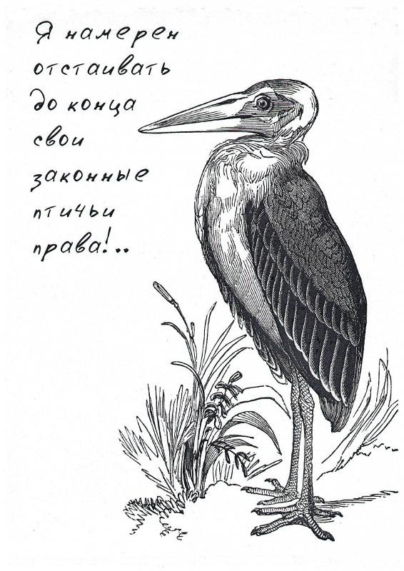 Серия авторских коллекционных открыток.