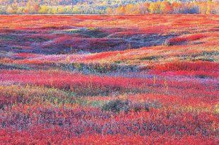 Блистательный цвет Кристофера Беркетта: новые работы.