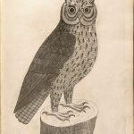 "Eleazar Albin ""Natural History of Birds"" 1737"