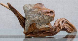 Поэзия дерева. Выставка Московского городского клуба «Природа и творчество».