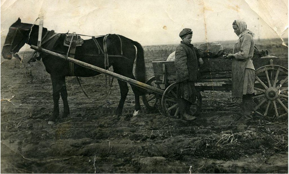 Уборка урожая в колхозе Огородный гигант. 1940-е гг. Предоставлено: © МГОМЗ.