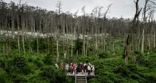 Онлайн показ фильма «Кислотный лес» Ругиле Барзджюкайте.