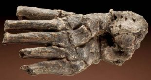 Выставка Травмы прошлого О чём говорят кости древних людей? Дарвиновский музей