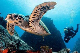 Фестиваль подводной фотографии «Дикий подводный мир» 2020.