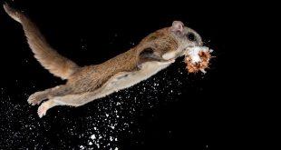 Звери-лётчики. Выставка о млекопитающих, рискнувших подняться в воздух.