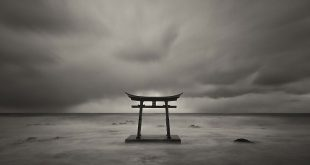 Выставка Сигэру Ёсида Фукусима надежда и отчаяние Государственный Дарвиновский музей
