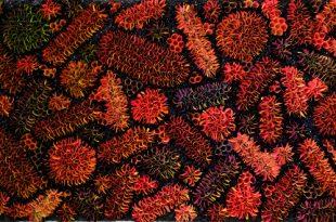 Выставка Чжуан Хунъи Соцветие Музей современного искусства Эрарта Санкт-Петербург