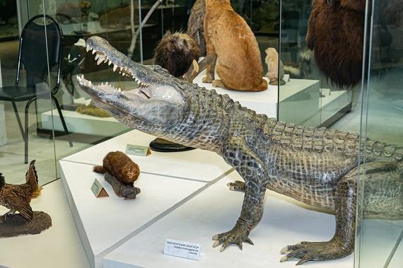 Дарвиновский музей Приключения одного аллигатора Праздник в честь легендарного аллигатора Сатурна