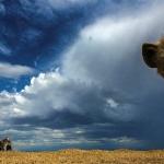 """Неха Маной, Кения """"Привет"""". Предоставлено: Международный фестиваль дикой природы """"Золотая черепаха""""."""